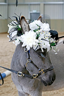 DBS - Donkey wearing a lovely bunch of flowers!