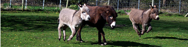 DBS - Very active donkeys!